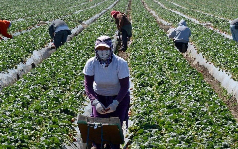 New Agri-Food Immigration Pilot